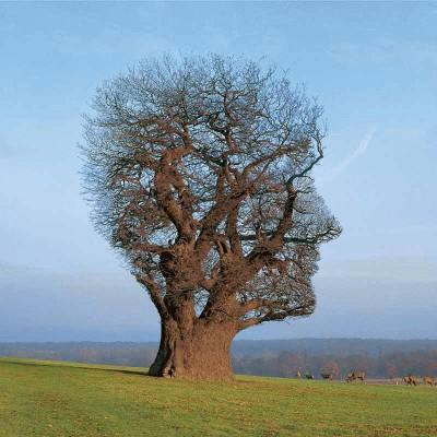 tree head